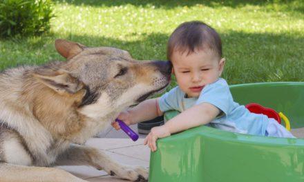 Cane e bambino: le regole d'oro del rapporto!