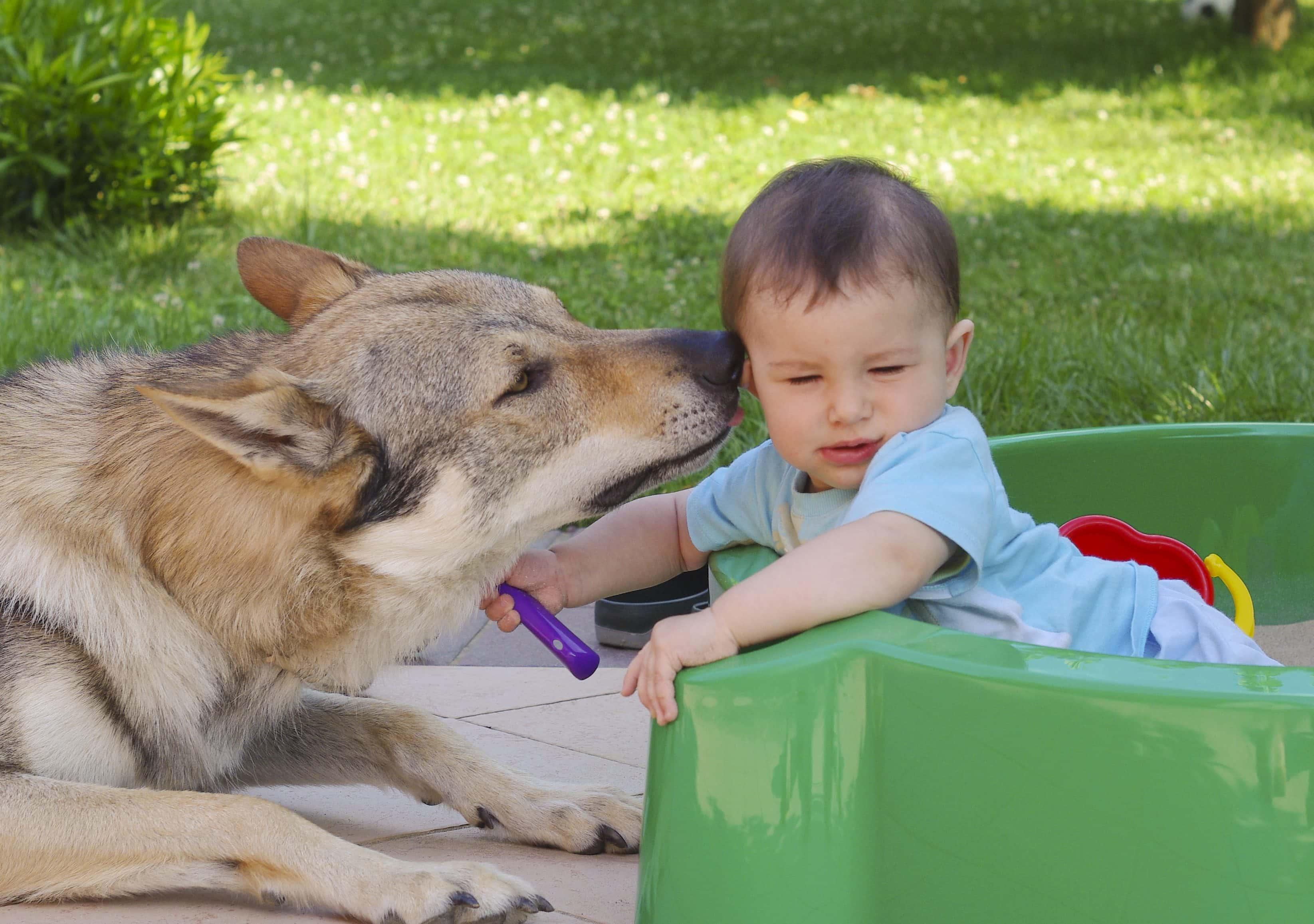 Rapporto cane-bambino: le regole d'oro!
