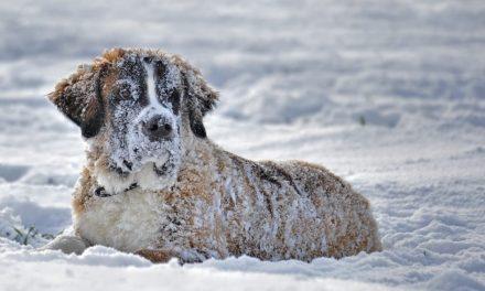 Il cane sulla neve: a cosa fare attenzione?