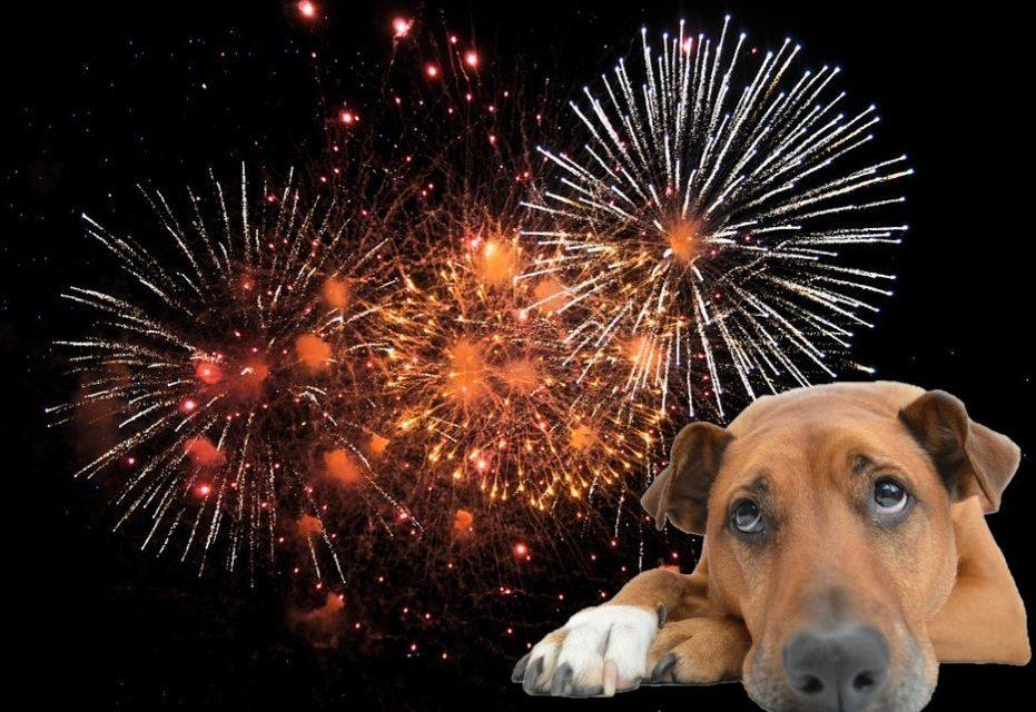 Paura dei botti di capodanno? Come aiutare il tuo cane!