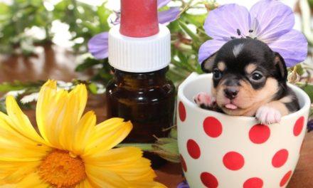 Omeopatia e medicina non convenzionale anche per il cane e il gatto!
