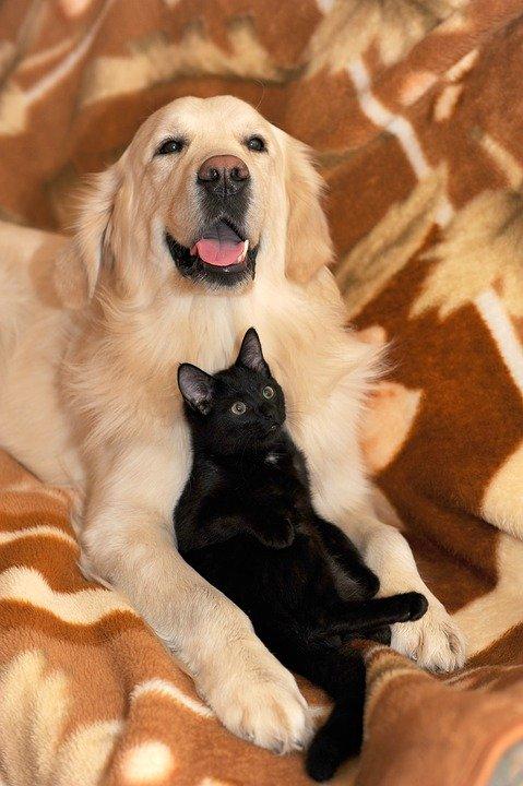 omeopatia per il cane e il gatto