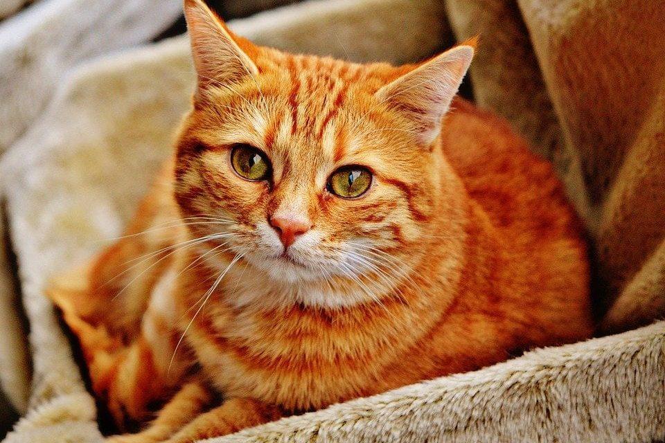 Fibrosarcoma nel gatto: cause, diagnosi e terapia!