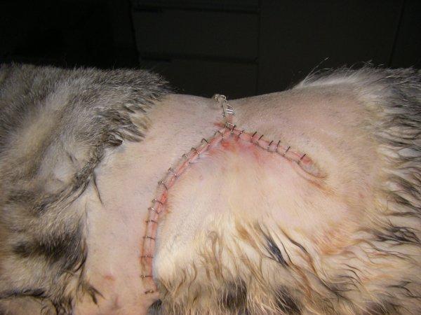 chirurgia ad ampi margini del fibrosarcoma
