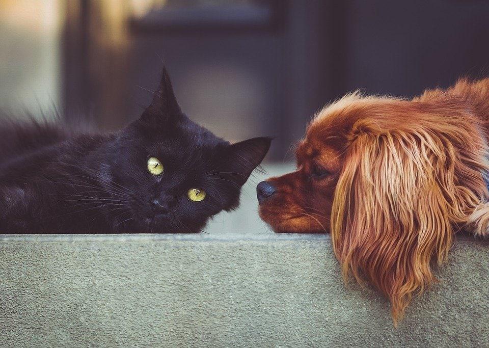Insufficienza pancreatica esocrina nel cane e nel gatto.