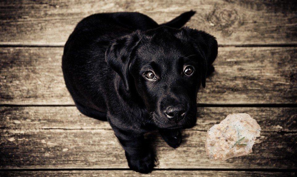Vomito nel cane e nel gatto: guida pratica su cosa fare!