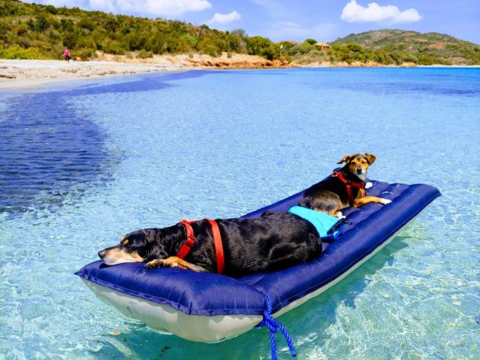 Cane in spiaggia: i consigli per la salute!