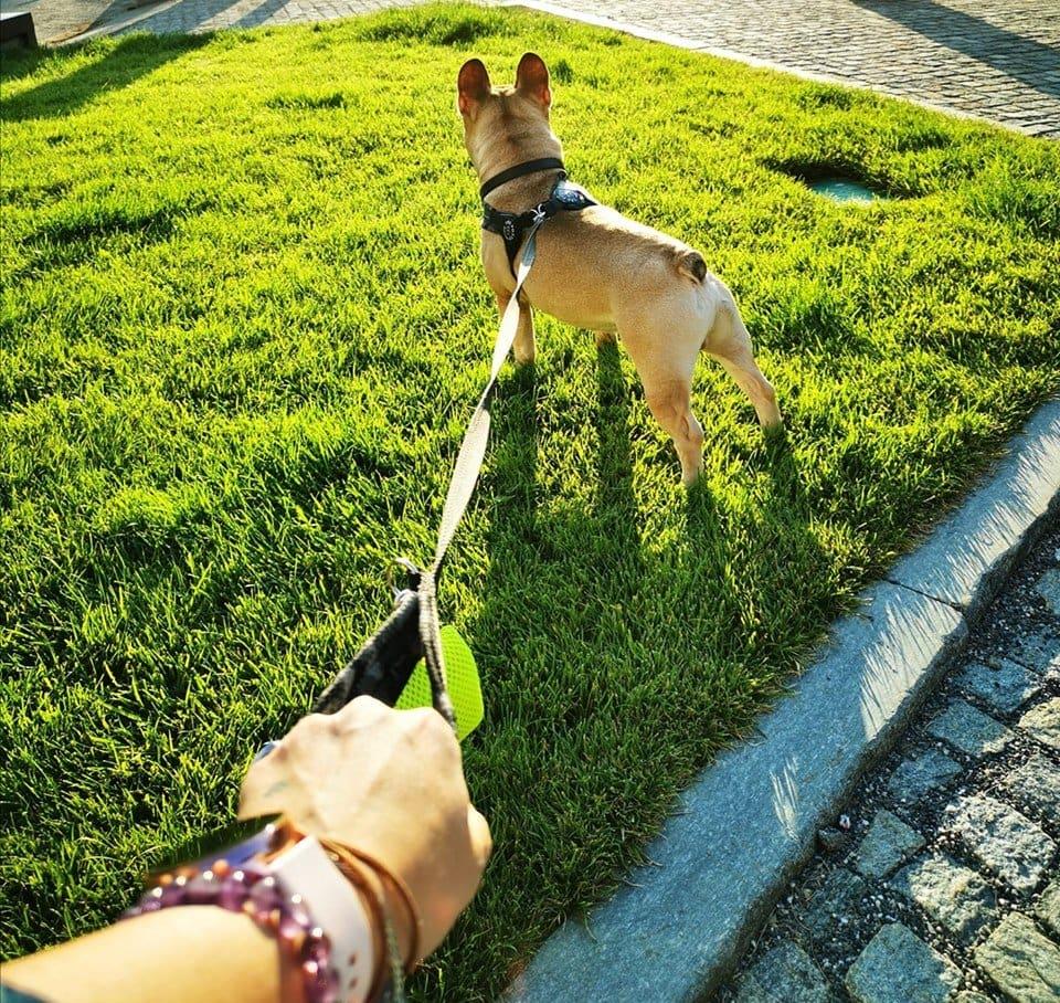 castrazione del cane maschio