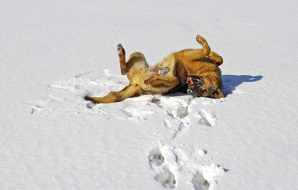 gastropessi preventiva nel cane