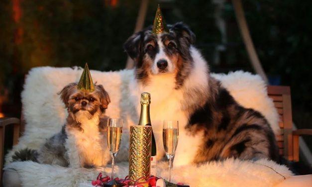 Cane che ha paura dei botti di Capodanno: 5 modi per aiutarlo.