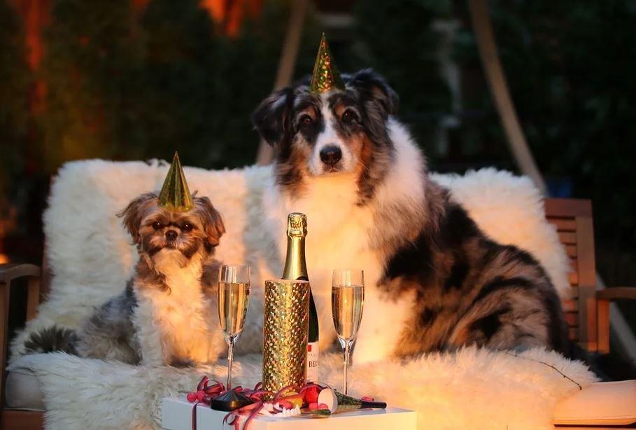 cane che ha paura dei botti di capodanno