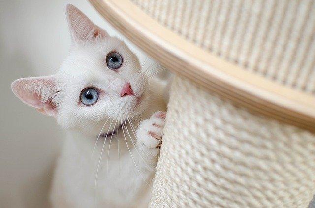 stress nel gatto