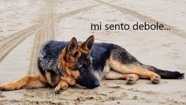 Miastenia gravis nel cane: debolezza e megaesofago!