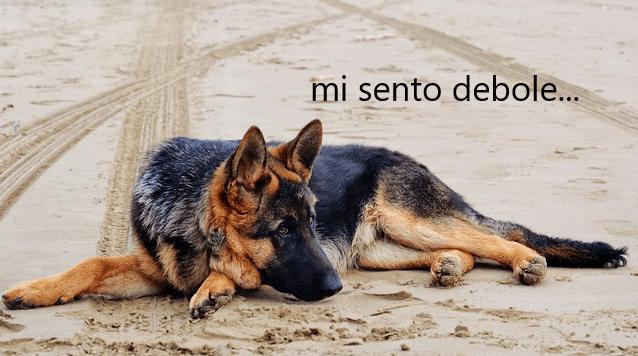 miastenia gravis nel cane