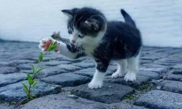 Gatto fuori o gatto in casa? PRO e CONTRO