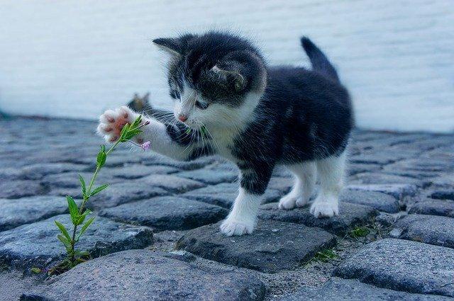 gatto fuori