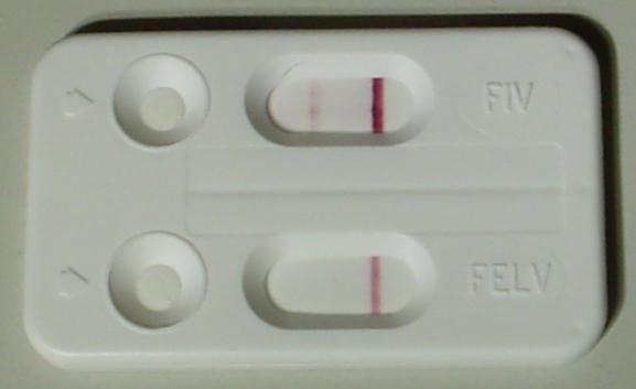 test Fiv Felv