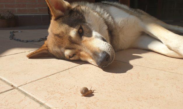 Strongili polmonari del cane e del gatto: sintomi e cura!