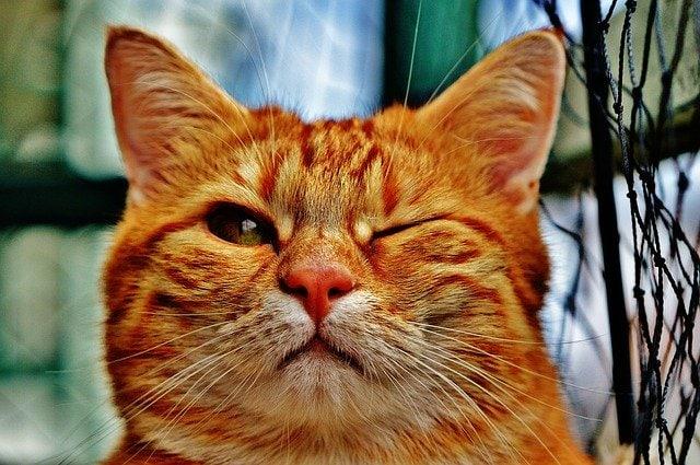 Sterilizzazione della gatta: tutte le risposte!