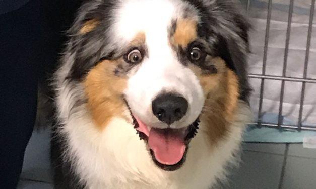 Tetano nel cane: sintomi e decorso.
