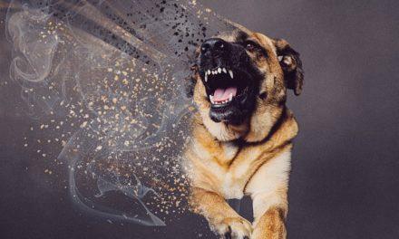 Rabbia nel cane: sintomi, diffusione e vaccino.