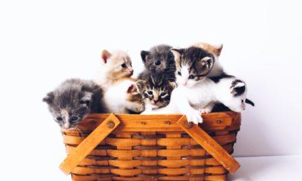 Panleucopenia felina: il parvovirus del gatto.
