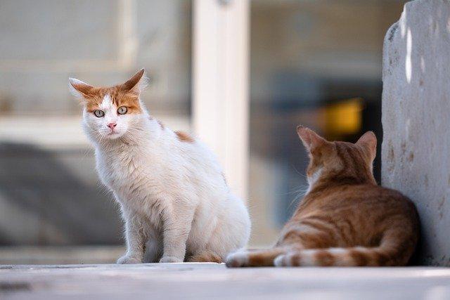 linfoma nel gatto