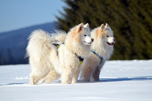 cappottino per cane