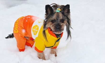 Cappottino per cane contro il freddo: serve davvero?