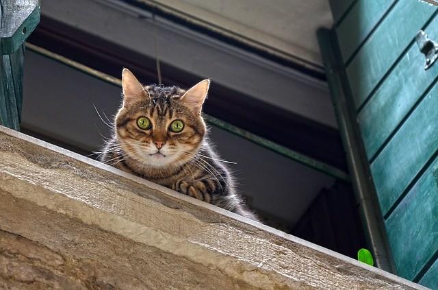 Rete per gatto volante: come evitare la caduta da balcone e finestre.