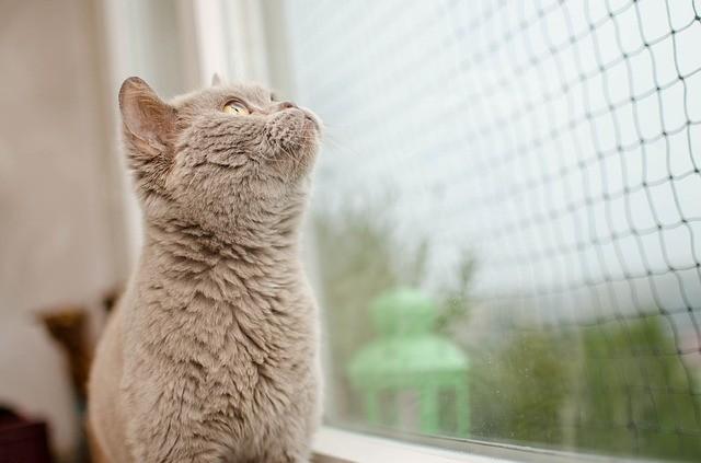 rete per gatto