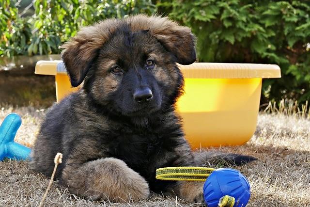 PDA nel cane