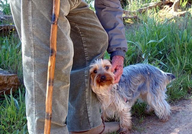demenza senile nel cane