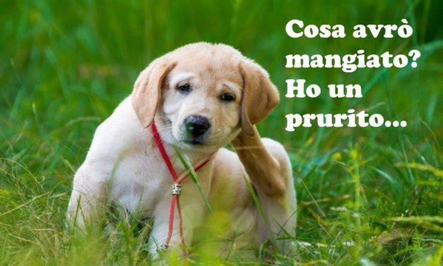 Allergia alimentare nel cane: sintomi e test diagnostici.