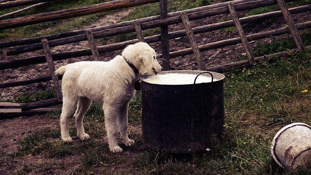allergia alimentare nel cane