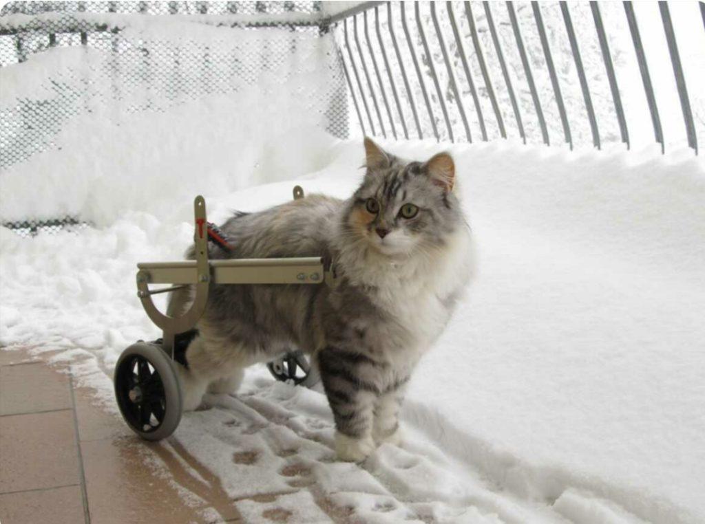 carrellino per gatto