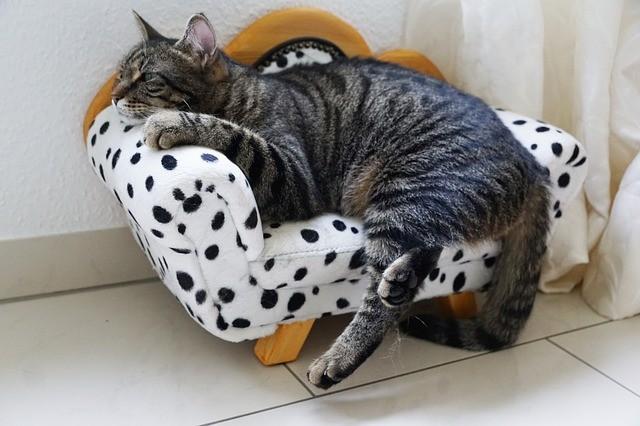 sindrome di Conn nel gatto