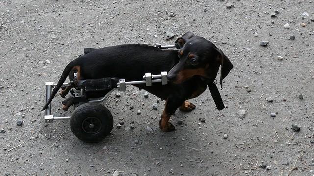 carrellino per cane