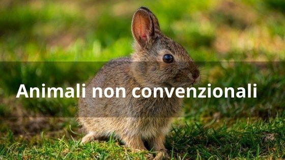 Animali non convenzionali