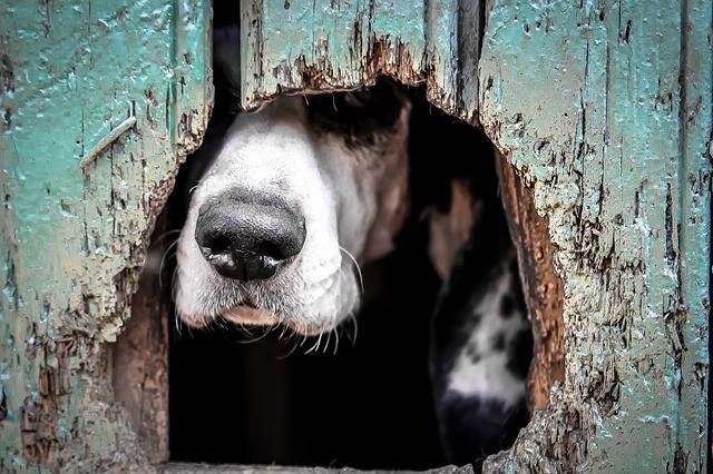 cane fobico