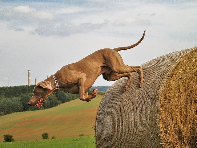 cane iperattivo