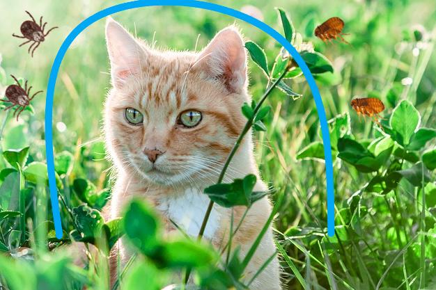 Antiparassitari per gatto: quando metterli?