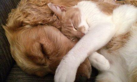 Quanto costa sterilizzare un gatto o un cane? Perchè?