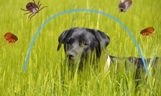 Antiparassitari per cane: come sceglierli?