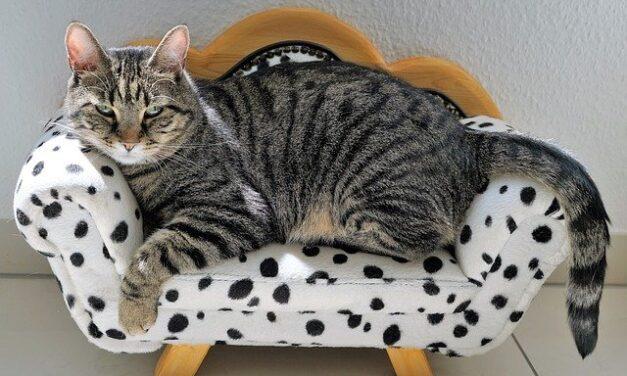 Il gatto non fa la cacca: stitichezza, megacolon e fecaloma.