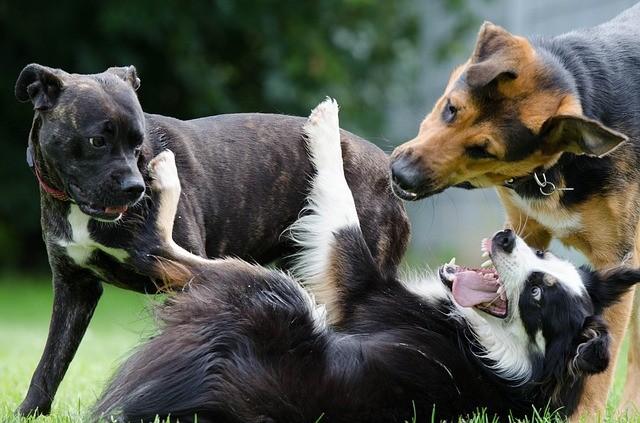 Socializzazione del cane adulto e del cucciolo
