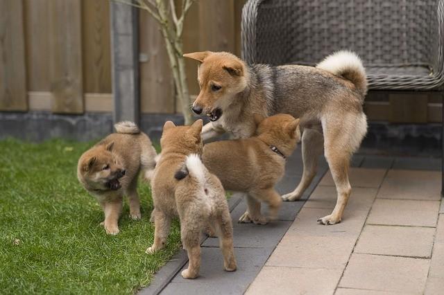 socializzazione del cane