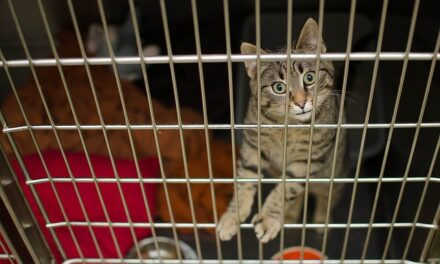 Triadite del gatto: Che cos'è? Come si cura?