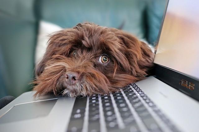 Ricetta elettronica veterinaria: Come funziona?