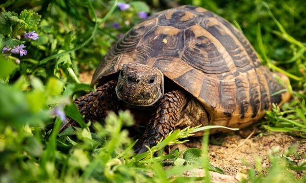 Tartaruga di terra: di cosa ha bisogno?